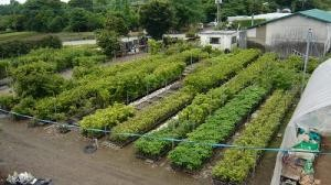 芳坂樹苗園 2